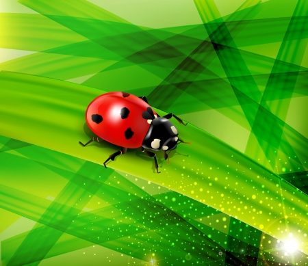 Vector ladybug on the background of green lush grass