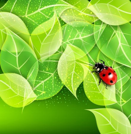 fleck: vector background with leaves and ladybug Illustration