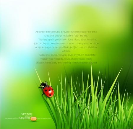 vector achtergrond met groen gras en lieveheersbeestje