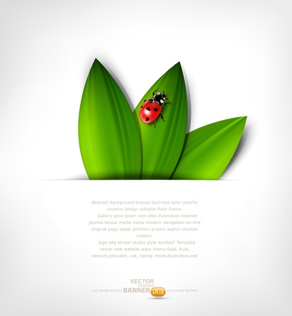 ladybird: vector grey background with leafs and ladybird