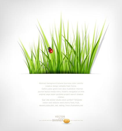 녹색 잔디와 무당 벌레 배경 일러스트