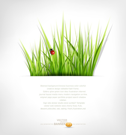 background with green grass and ladybug Vector