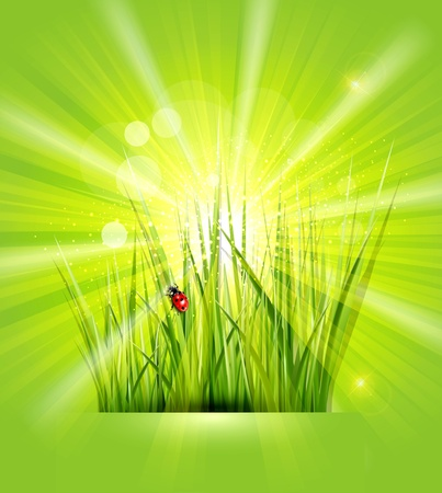 spring background with green grass, sunshine and a ladybird Stock Vector - 18404543