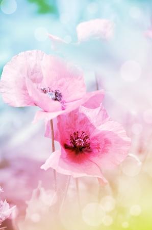 양 귀 비와 로맨틱 한 파스텔 꽃 배경