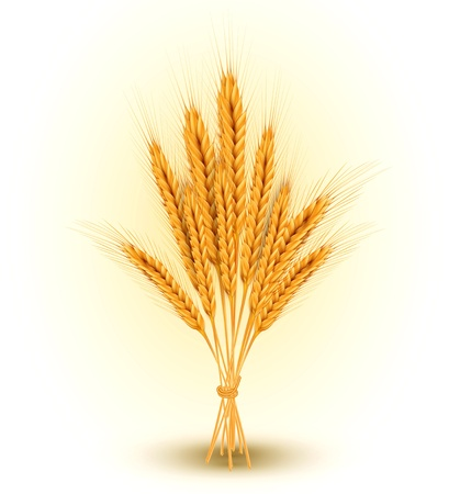 fields: background with a sheaf of golden wheat ears Illustration