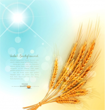 wheat field: background with a sheaf of golden wheat ears Illustration