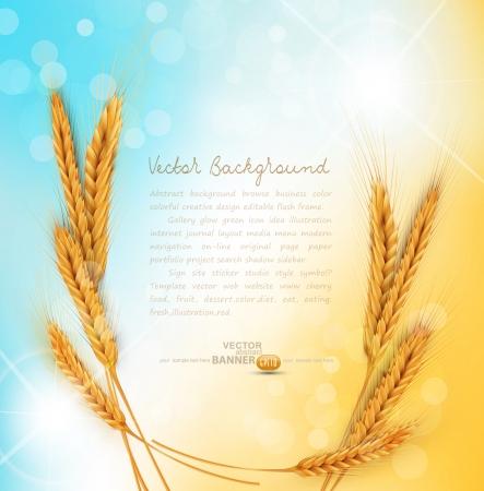 fondo con oro espigas de trigo y los rayos del sol Ilustración de vector