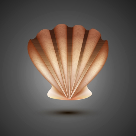 aquaculture: sea shell on a gray background