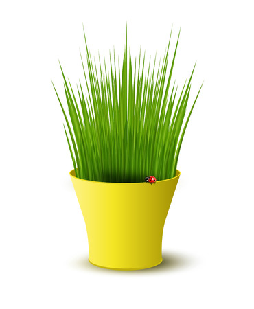 plant pot: vector yellow pot with green grass Illustration