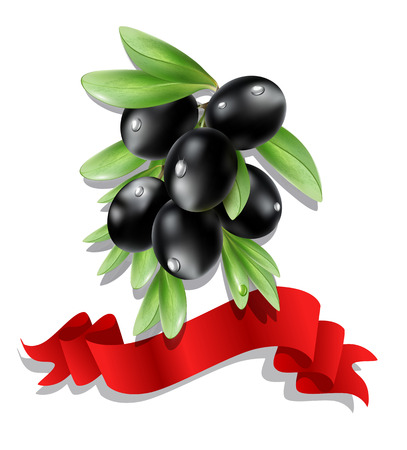 black olive: vector black olive branch with red ribbon on white background ( isolated) Illustration