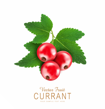 red currants: vector red currant isolated on a white background