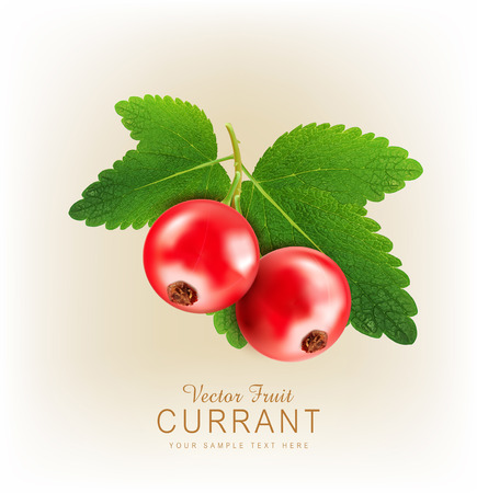 red currants: vector red currant isolated