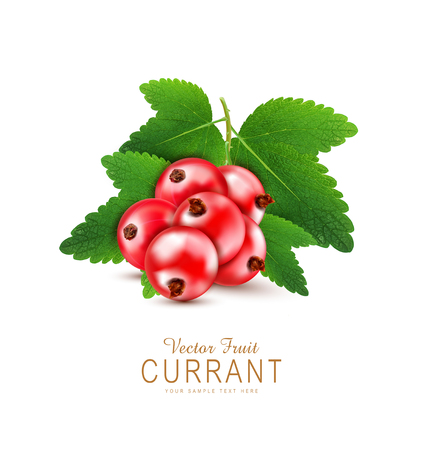 currants: vector red currant isolated on a white background
