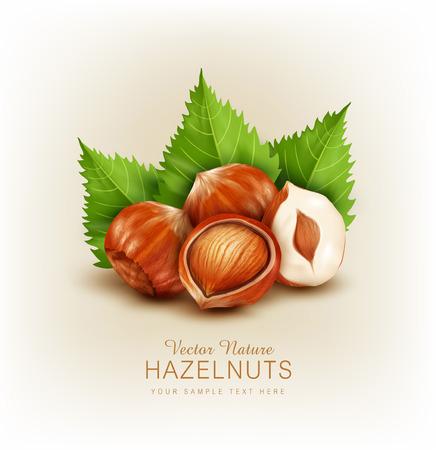 vector hazelnut isolated (element for design)