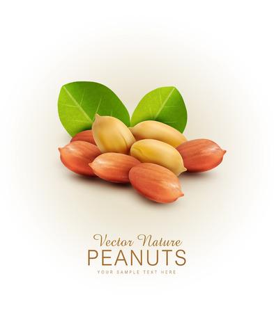 peanut: Vector peanut kernels isolated with green leaves (design element) Illustration