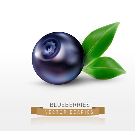 blueberries: vector blueberries isolated on a white background Illustration