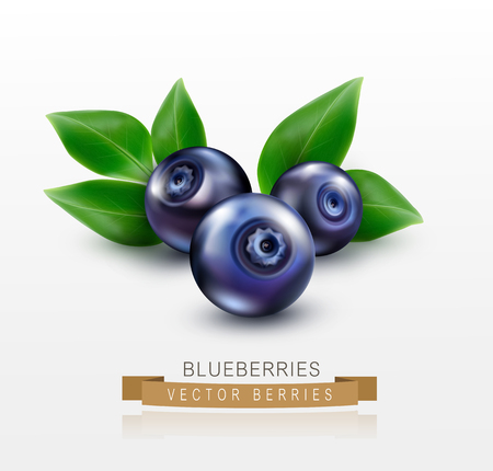 blueberries: three vector blueberries with green leaves isolated on a white background Illustration