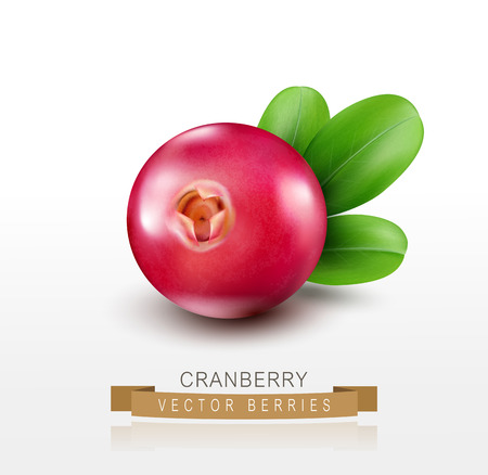 Vector isolated cranberries on a white background