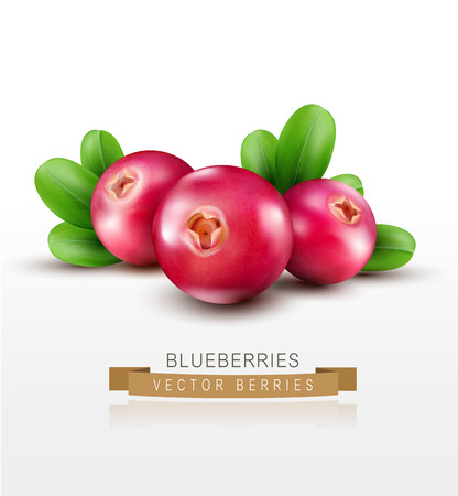 Vector isolated cranberries with green leaves on a white background Ilustração