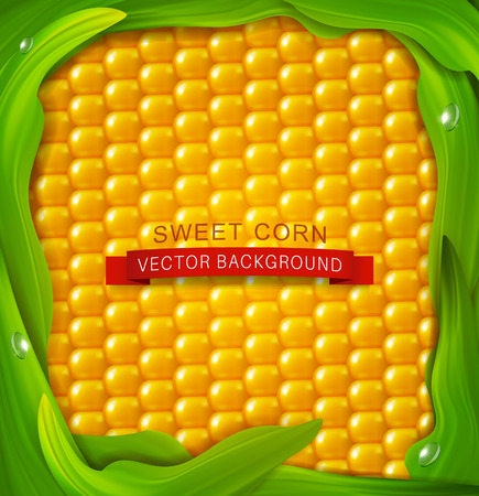 background. Yellow corn, green leaves around