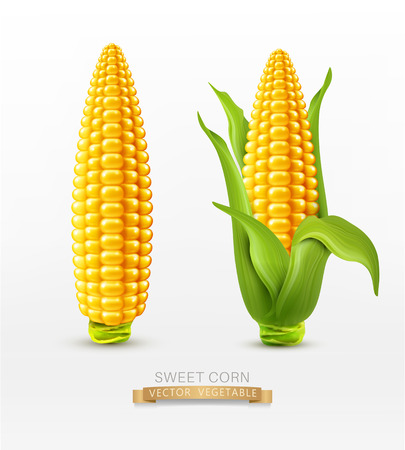 Vector Dos maíz. maíz en la mazorca con las hojas. elemento de diseño Foto de archivo - 53635672