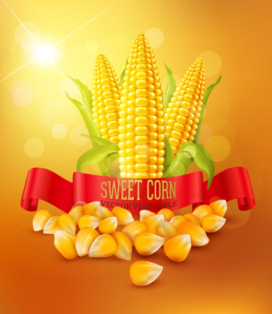 vector background with grains and cobs of corn and red ribbon