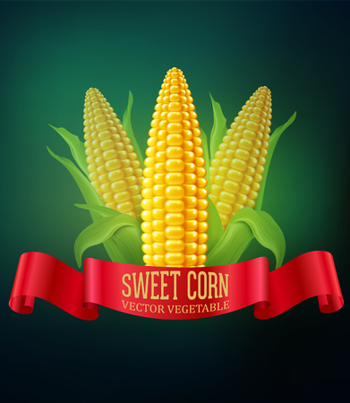 ready to cut: vector background with  cobs of corn and red ribbon