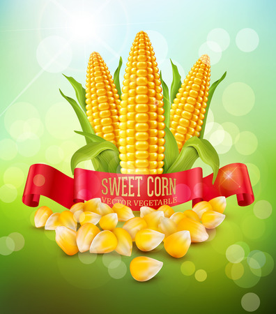 background with grains and cobs of corn and red ribbon 向量圖像