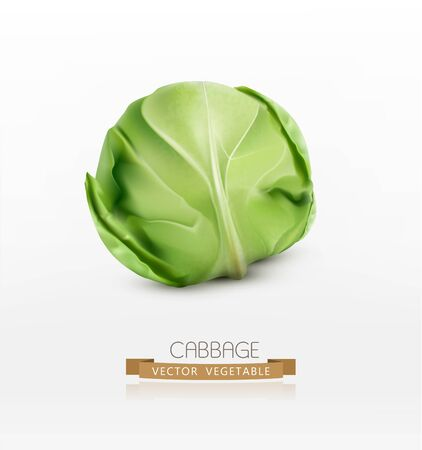 cabbage: vector cabbage, isolated on a white background