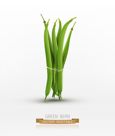 french produce: vector green beans bound sheaf isolated on white background