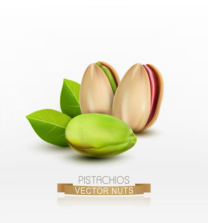 Vector pistachios peeled or in shell isolated on white background
