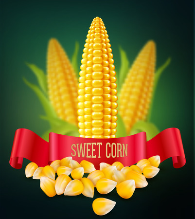 ready cooked: vector background with grains and cobs of corn and red ribbon