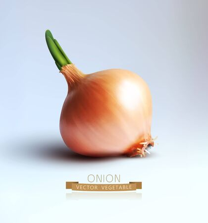 onions: vector bulb isolated on gray background Illustration
