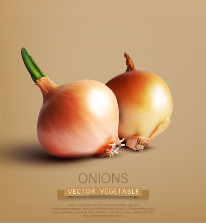 cebolla: vector dos cebollas Vectores