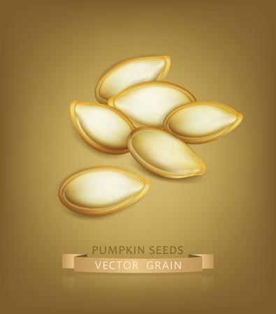pumpkin seeds: Vector pumpkin seeds