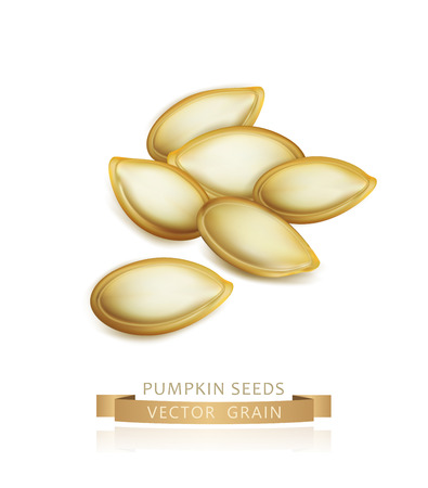 Vector pumpkin seeds isolated on white background