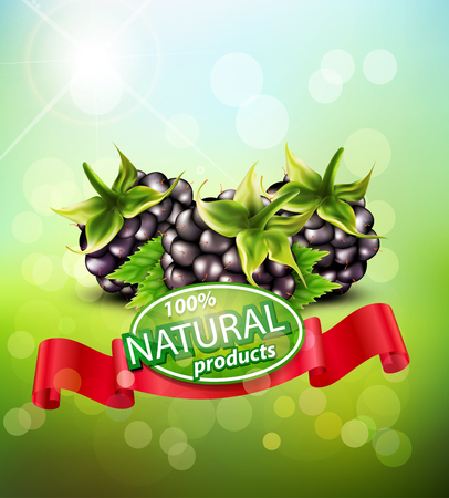 blackberries: Vector background with blackberries and red ribbon