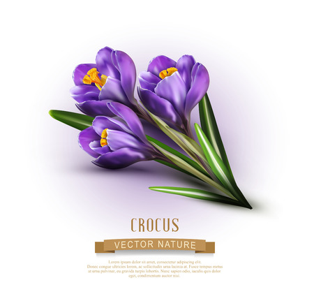 Vector background with blue crocuses
