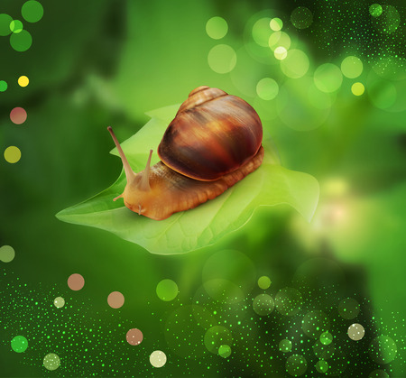 mucus: vector snail crawling on the green leaf