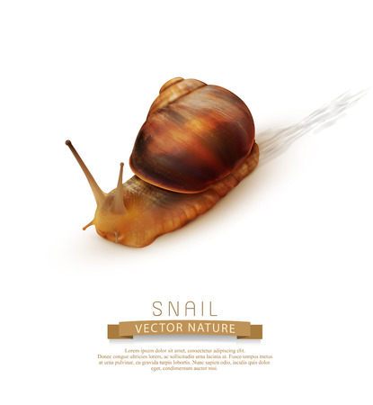 vector snail crawling on a white background Illustration