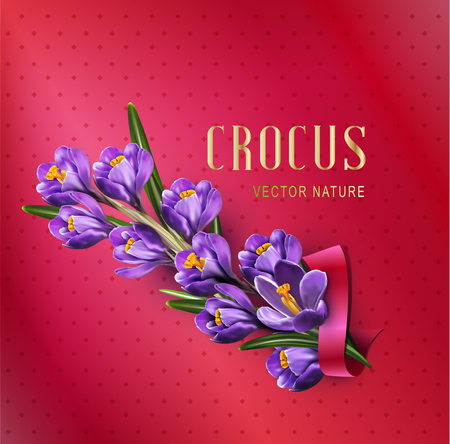 violet: Vector greeting card with blue crocuses, red ribbon and place for text on a purple background Illustration