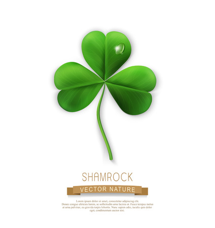 vector green shamrock on a white background (element for design) for the holiday St. Patrick Illustration
