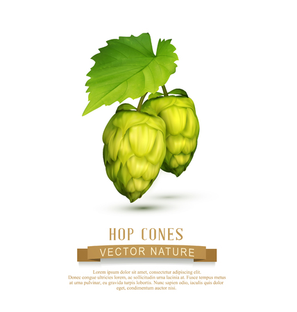 vector hop cones with leaf isolated on white background