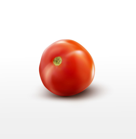 close up food: vector tomato isolated on white background