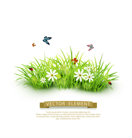 Vector element for design. Green grass with white flowers, butterflies and ladybug. isolated on white background Illustration