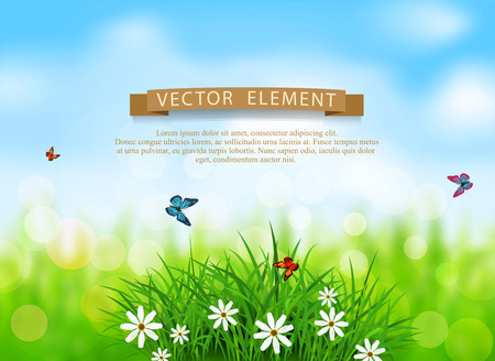 lawn: Vector element for design. Green grass with white flowers, butterflies on a  spring, meadow, blurred background Illustration