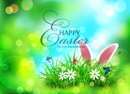 traditional: Vector background for Easter. Template. Rabbit ears sticking out of the grass .