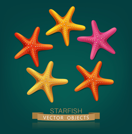 Vectorial starfish isolated on dark green background
