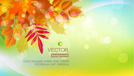 Vector background with autumn leaves. Element for the design, advertising, template Ilustracja
