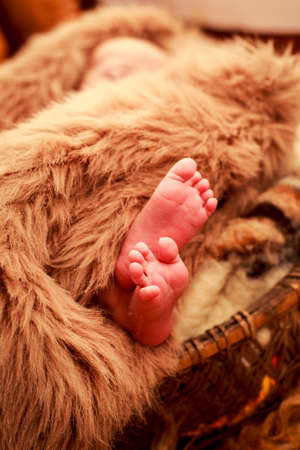 fell: closeup small newborn baby feet put out of brown sheep fell